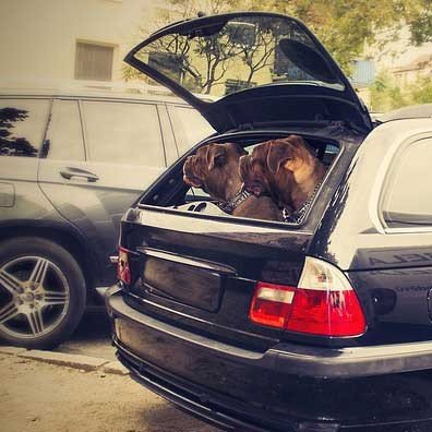 Kofferraum-Schutz-Walser-Auto