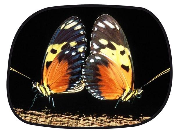 Sonnenschutz Seitenfenster selbsthaftend 45 x 34 cm - Motiv Schmetterling